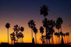 As palmeiras mostram em silhueta com por do sol Fotografia de Stock Royalty Free