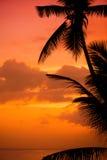 As palmeiras mostram em silhueta na praia tropical do por do sol Por do sol alaranjado Fotos de Stock
