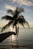 As palmeiras mostram em silhueta no por do sol Tailândia imagens de stock