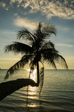 As palmeiras mostram em silhueta no por do sol Tailândia foto de stock