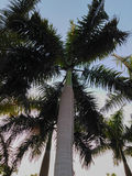 As palmeiras no al-Azhar estacionam - o Cairo - Egito Fotografia de Stock