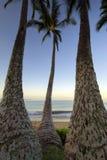 As palmeiras no alvorecer em Ulua encalham, Maui, Havaí Fotos de Stock