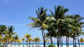 As palmeiras, o céu azul e o oceano brilhante do aqua molham filme