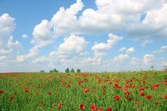 As papoilas florescem o prado e o céu azul com nuvens ajardina Fotografia de Stock