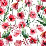 As papoilas vermelhas florais ervais do outono maravilhoso bonito brilhante do verão florescem com a aquarela verde do teste padr ilustração stock