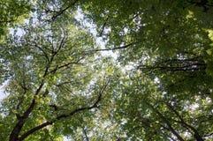 As partes superiores da árvore são iluminadas pelo sol de ajuste na natureza das horas de verão da floresta Céu do espaço livre d Fotografia de Stock