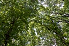 As partes superiores da árvore são iluminadas pelo sol de ajuste na natureza das horas de verão da floresta Céu do espaço livre d Imagem de Stock Royalty Free