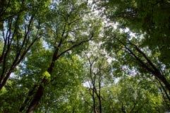 As partes superiores da árvore são iluminadas pelo sol de ajuste na natureza das horas de verão da floresta Céu do espaço livre d Fotos de Stock