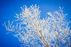 As partes superiores das árvores cobriram com a geada no inverno o parque da cidade Arquitectura da cidade do inverno Fotografia de Stock Royalty Free