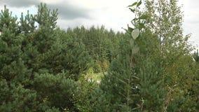 As partes superiores das árvores contra o céu Coroas de árvores verdes vídeos de arquivo