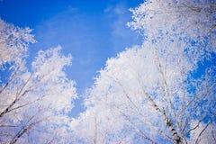 As partes superiores das árvores de vidoeiro cobriram com a geada no inverno o parque da cidade Arquitectura da cidade do inverno Fotos de Stock