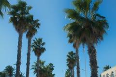As partes superiores das palmas em duas fileiras moldam a estrada fotos de stock