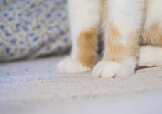 As patas bonitos do gato macio ao sentar-se no sofá imagens de stock