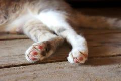 As patas do ` s do gato suportam assoalho de madeira nas patas cinzentas listradas sujas imagens de stock royalty free