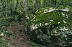 As pedras e o musgo Foto de Stock Royalty Free