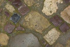 As pedras molhadas moeram após a chuva em Lvov Fotos de Stock