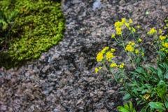 As pedras texture e fundo Balan? a textura imagem de stock