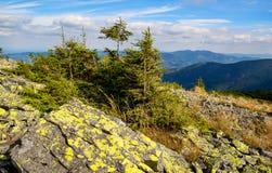 As pedras velhas e as árvores verdes na montanha cobrem Foto de Stock Royalty Free