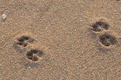 As pegadas do cão em Sanur encalham, Bali Imagem de Stock