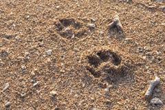 As pegadas do cão em Sanur encalham, Bali Imagem de Stock Royalty Free