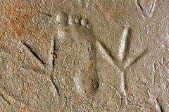 As pegadas do ser humano e do pássaro compararam na areia molhada Foto de Stock Royalty Free
