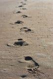 As pegadas na areia perto do oceano suportam Imagens de Stock Royalty Free