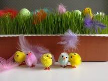 As penas coloridas e o passatempo da galinha de easter crafts o acessório Foto de Stock
