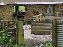 As penas de carneiros de pedra dilapidaram.  Telhado e painéis ondulados Imagem de Stock Royalty Free