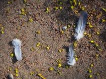 As penas de pássaro cinzentas na terra fotografia de stock royalty free