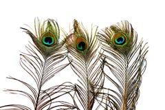 As penas do pavão Fotografia de Stock Royalty Free
