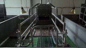 As penas limpas novas vazias na sala de maternidade estão na exploração agrícola industrial moderna da porco-criação de animais,  filme