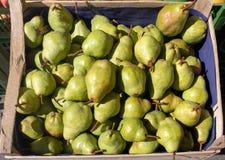 As peras verdes empilham na venda em uma caixa de madeira, na luz solar fruto saudável do outono fotografia de stock