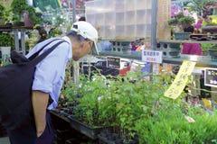 As pessoas idosas escolhem a planta decorativa no mercado da flor da cidade de taipei Foto de Stock Royalty Free