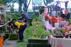 As pessoas idosas escolheram a planta decorativa no mercado da flor da cidade de taipei Imagens de Stock