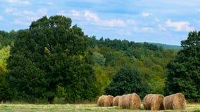 As pilhas de feno ferem-se neetly à esquerda nos campos em Cluj, Romênia fotos de stock royalty free