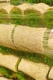 As pilhas de grama rolam para o gramado novo fotografia de stock