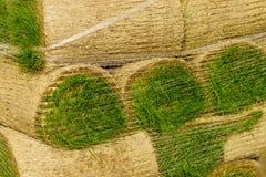 As pilhas de grama rolam para o gramado novo imagens de stock royalty free
