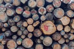 As pilhas de madeira registram o fundo fotos de stock