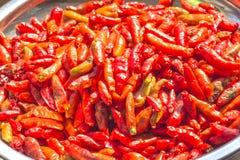 As pimentas vermelhas são secadas Fotos de Stock Royalty Free