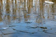 As placas estão no gelo fino da mola de água do rio Mola Fotos de Stock