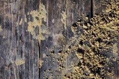 As placas lixam a luz de madeira amarela cinzenta de madeira do sol do vintage da opinião superior do fundo da textura do passeio Fotos de Stock