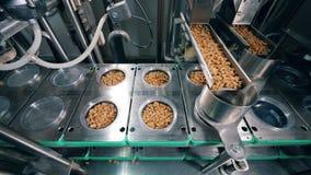 As placas plásticas estão obtendo enchidas com os pães ralados mecanicamente Equipamento da f?brica do alimento filme