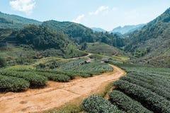 As plantações de chá Imagens de Stock Royalty Free