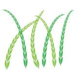 As plantas ?cone, s?mbolo do arroz, folheiam ilustração royalty free