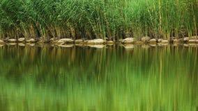As plantas bonitas e a reflexão ao lado do rio na cor verde morna tonificam Imagem de Stock Royalty Free