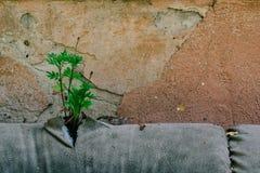 as plantas brotaram através do estofamento do sofá, sofá abandonado de couro velho na rua na fachada do destruída imagens de stock royalty free