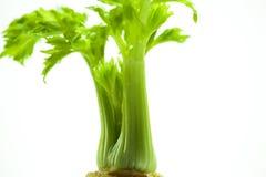 As plantas carnudas, cactos, peônias brancas, plantas da folha são mais zen sobre o fundo branco Imagens de Stock Royalty Free