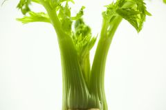 As plantas carnudas, cactos, peônias brancas, plantas da folha são mais zen sobre o fundo branco Fotos de Stock Royalty Free