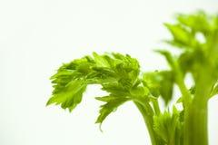 As plantas carnudas, cactos, peônias brancas, plantas da folha são mais zen sobre o fundo branco Fotografia de Stock Royalty Free