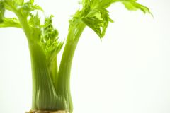 As plantas carnudas, cactos, peônias brancas, plantas da folha são mais zen sobre o fundo branco Imagem de Stock Royalty Free